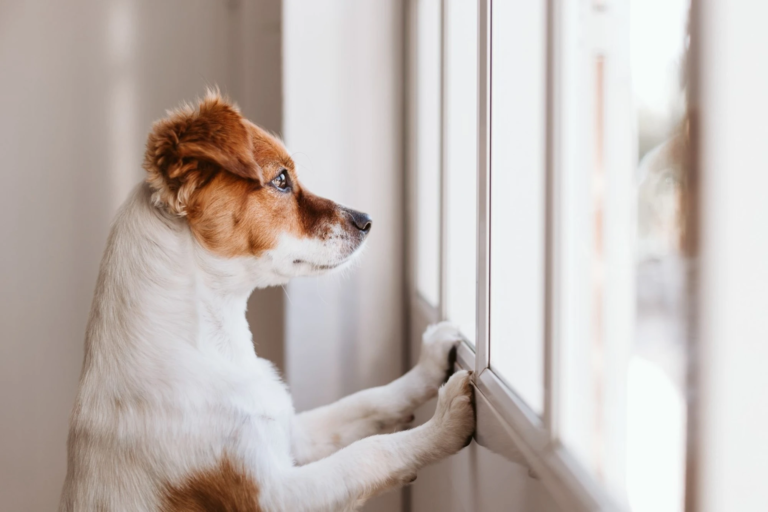 How to Help Your Dog with Seperation Anxiety